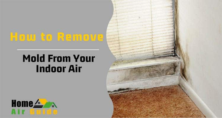 How To Remove Mold From Your Indoor Air