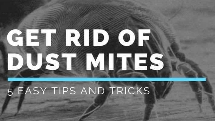 5 Ways to Get Rid of Dust Mites