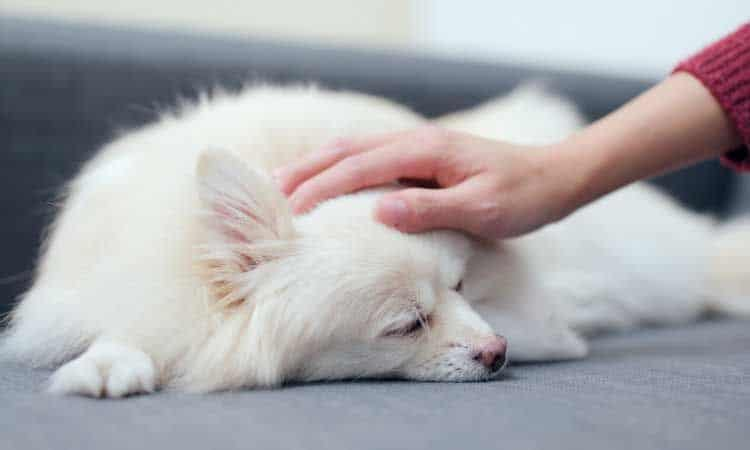 How To Get Rid Of Pet Hair In House